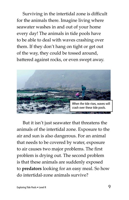 Book Preview For Exploring Tide Pools Page 9