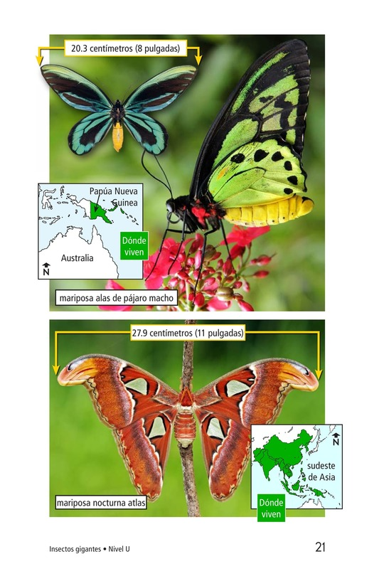 Book Preview For Giant Insects Page 21