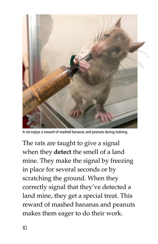 Book Preview For HeroRATs: Rats Who Save Lives Page 10