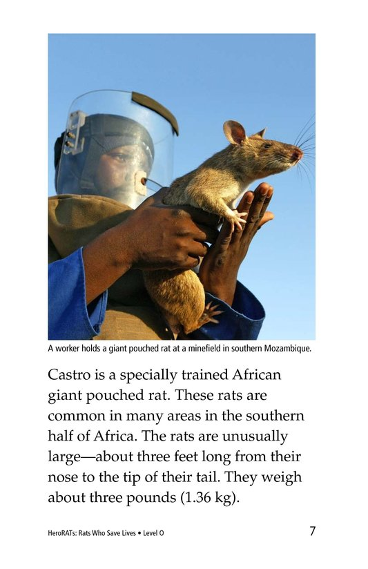 Book Preview For HeroRATs: Rats Who Save Lives Page 7