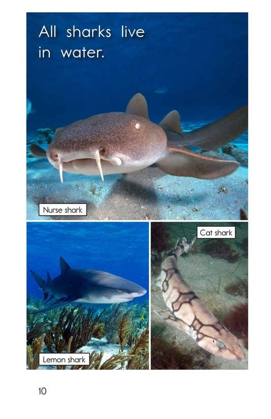 Book Preview For Different Kinds of Sharks Page 10