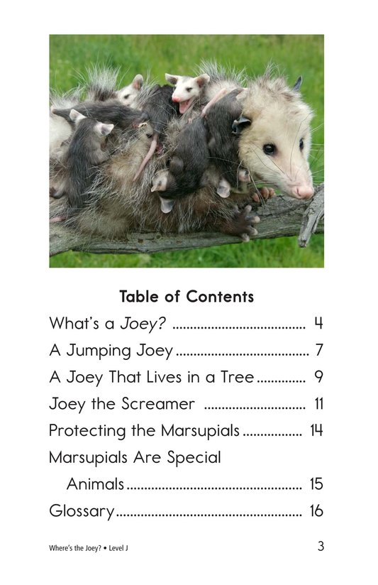 Book Preview For Where's the Joey? Page 3
