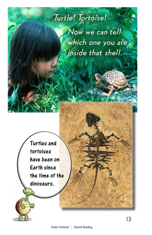 Book Preview For Turtle! Tortoise! Page 13