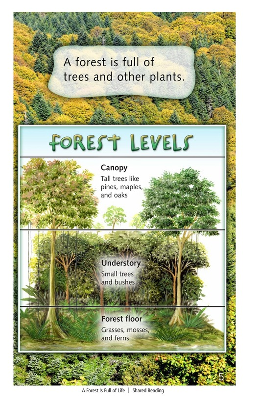 Book Preview For A Forest Is Full of Life Page 5