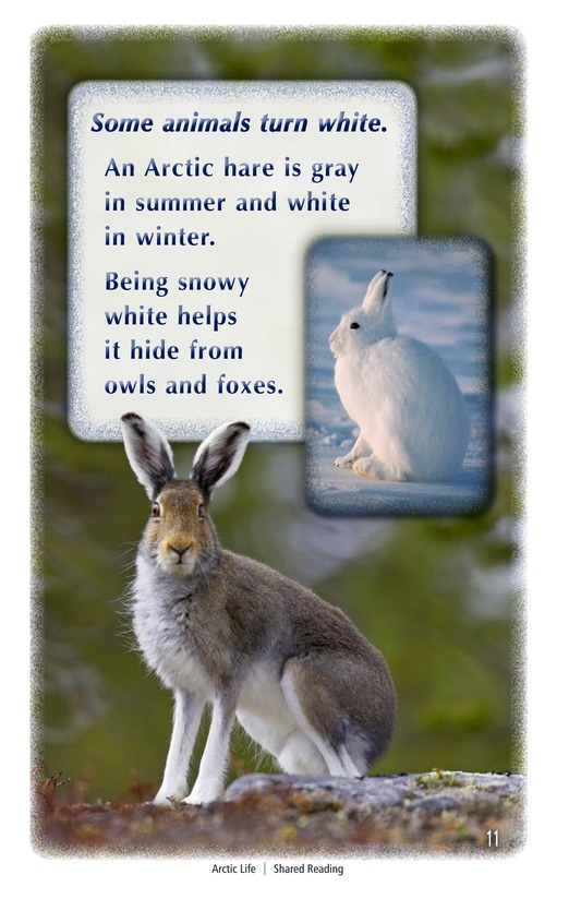 Book Preview For Arctic Life Page 11