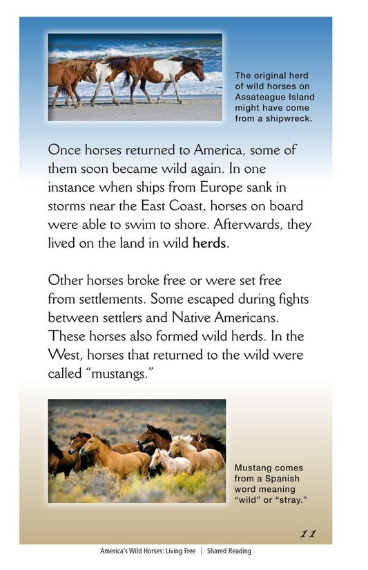 Book Preview For America's Wild Horses: Living Free Page 11