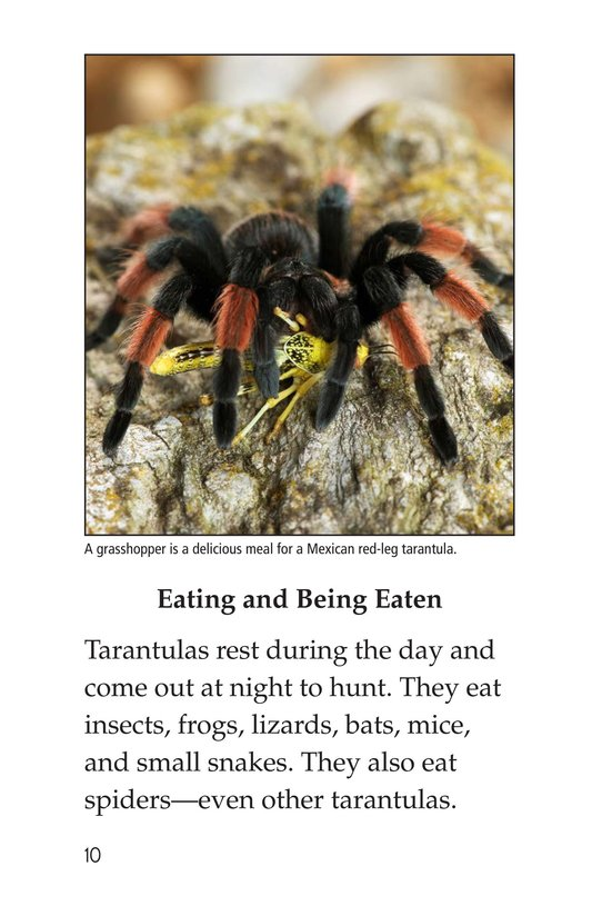 Book Preview For Tarantula! Page 10