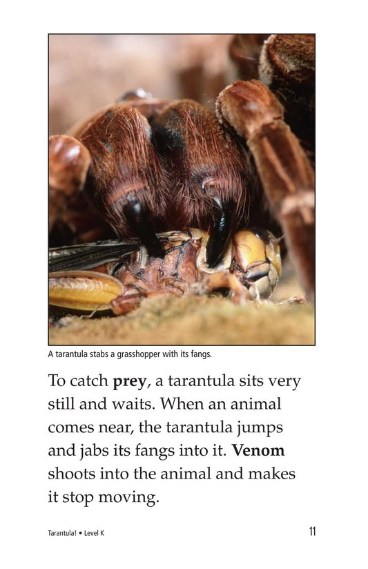 Book Preview For Tarantula! Page 11