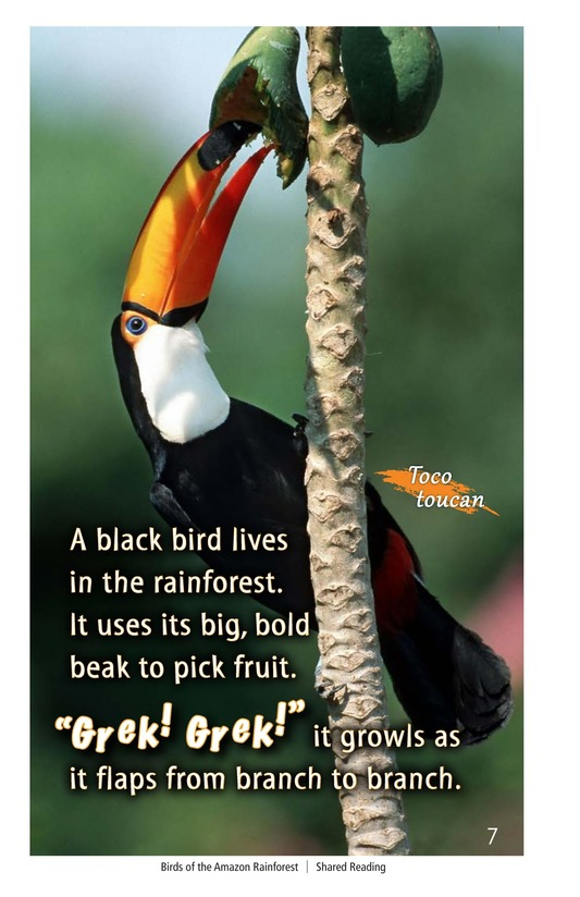 Book Preview For Birds of the Amazon Rainforest Page 7