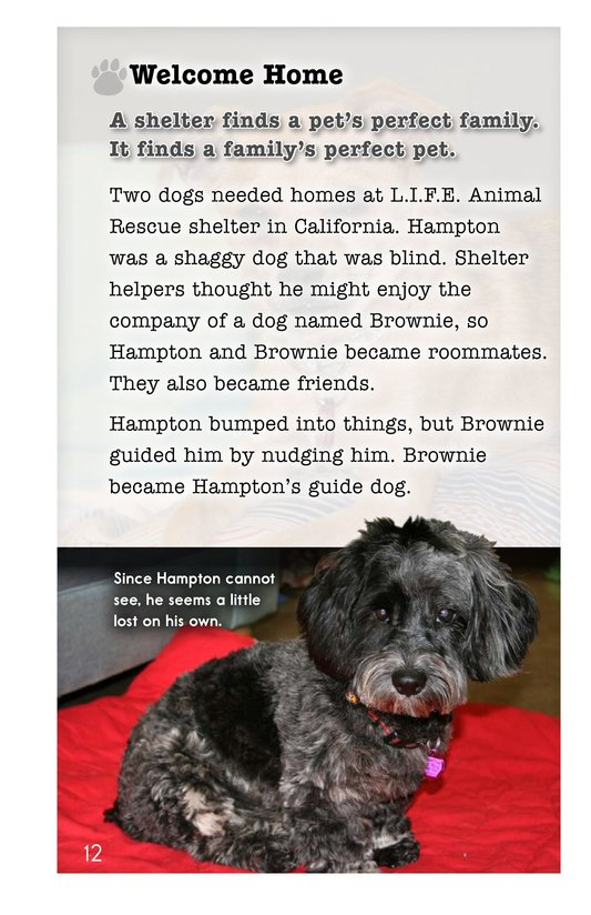 Book Preview For A Pet's Perfect Home Page 12