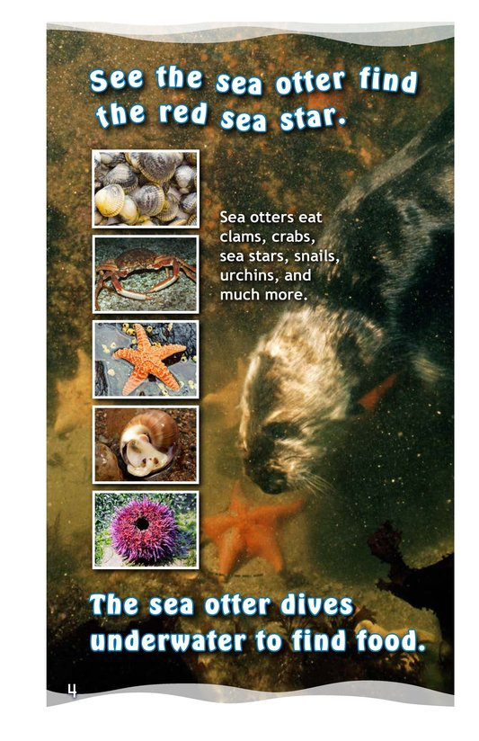 Book Preview For See the Sea Otter Page 4