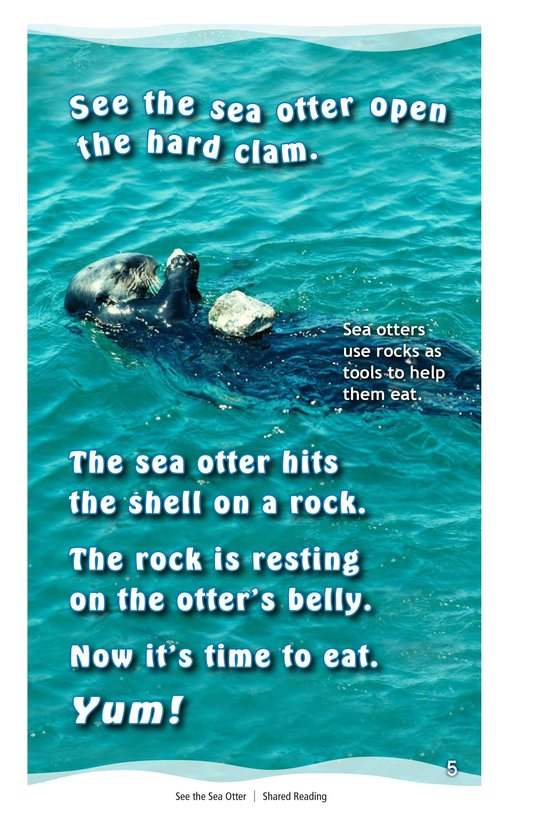 Book Preview For See the Sea Otter Page 5