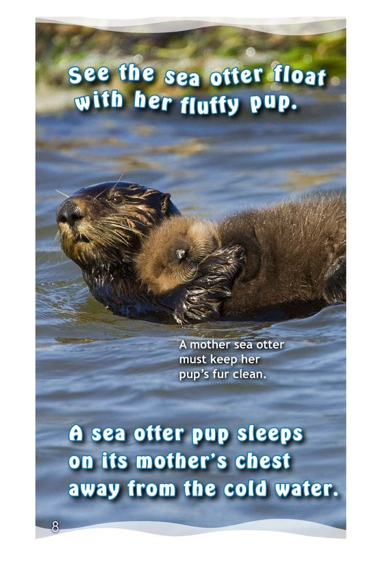 Book Preview For See the Sea Otter Page 8