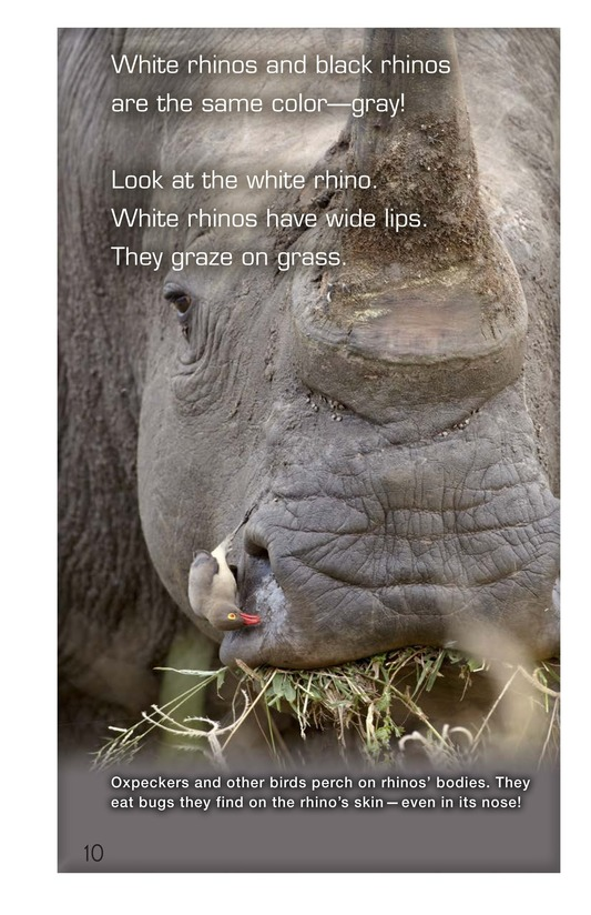 Book Preview For Let's Look at Rhinos Page 10