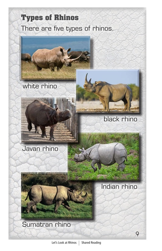 Book Preview For Let's Look at Rhinos Page 9