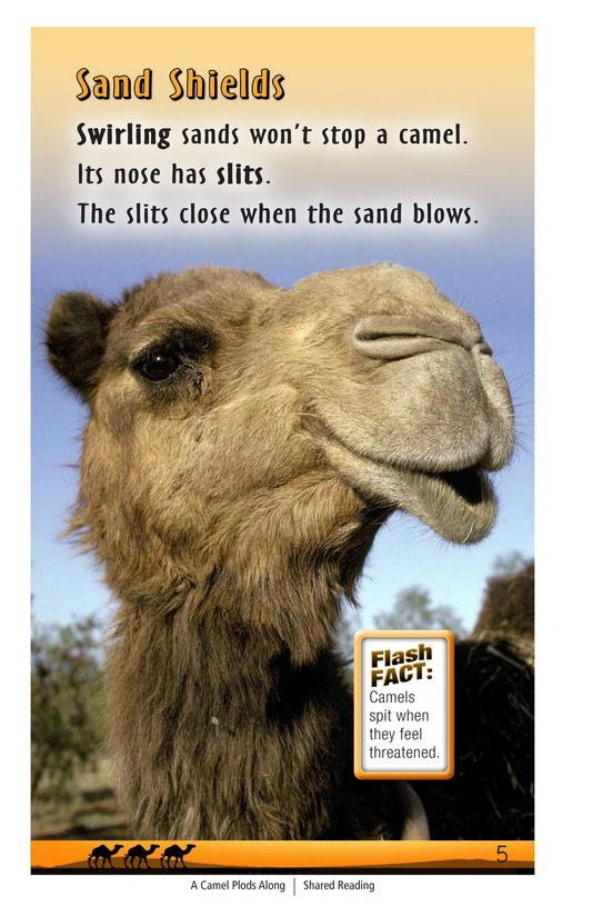Book Preview For A Camel Plods Along Page 5