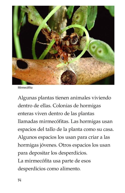 Book Preview For Strange Plants Page 14