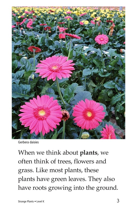 Book Preview For Strange Plants Page 3