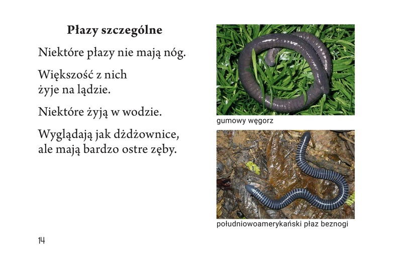 Book Preview For Slithery and Slimy Page 14