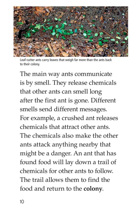 Book Preview For Awesome Ants Page 10