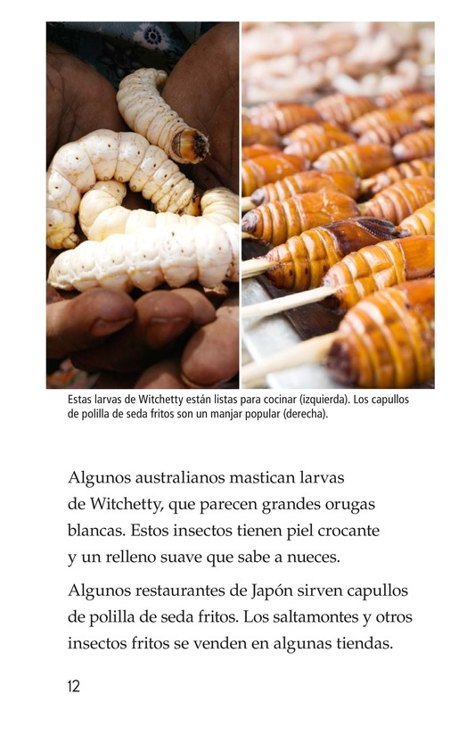 Book Preview For Edible Bugs Page 12
