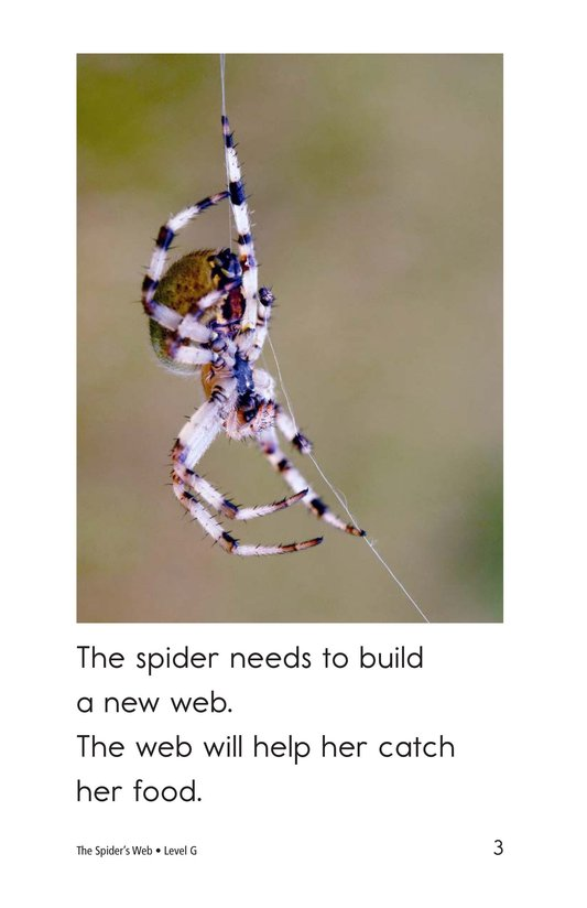 Book Preview For The Spider's Web Page 3