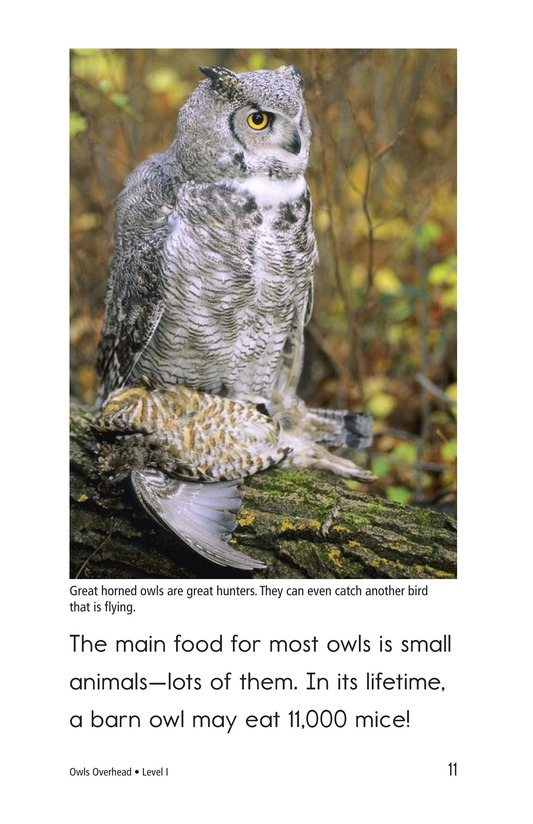 Book Preview For Owls Overhead Page 11