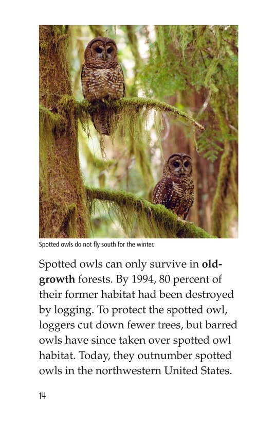 Book Preview For Owls Overhead Page 14