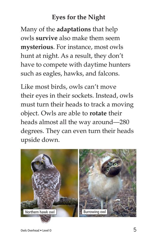 Book Preview For Owls Overhead Page 5