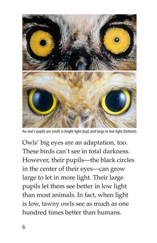 Book Preview For Owls Overhead Page 6