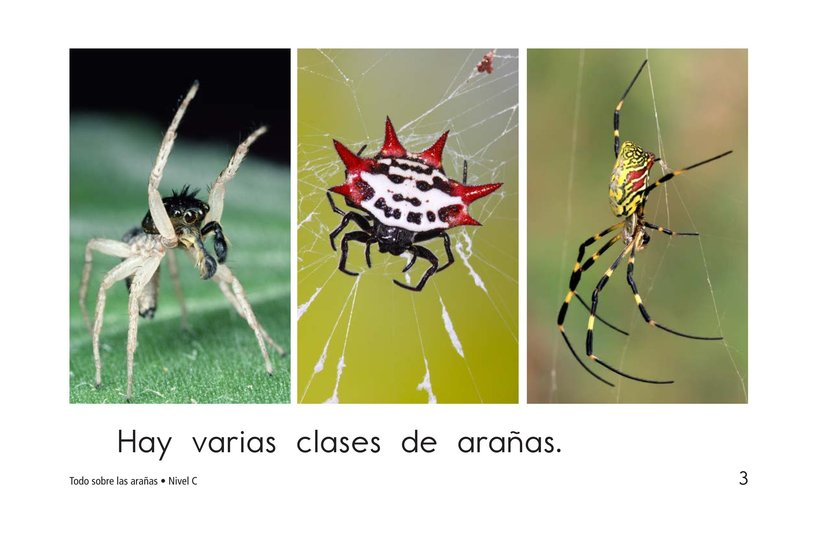 Book Preview For All About Spiders Page 3