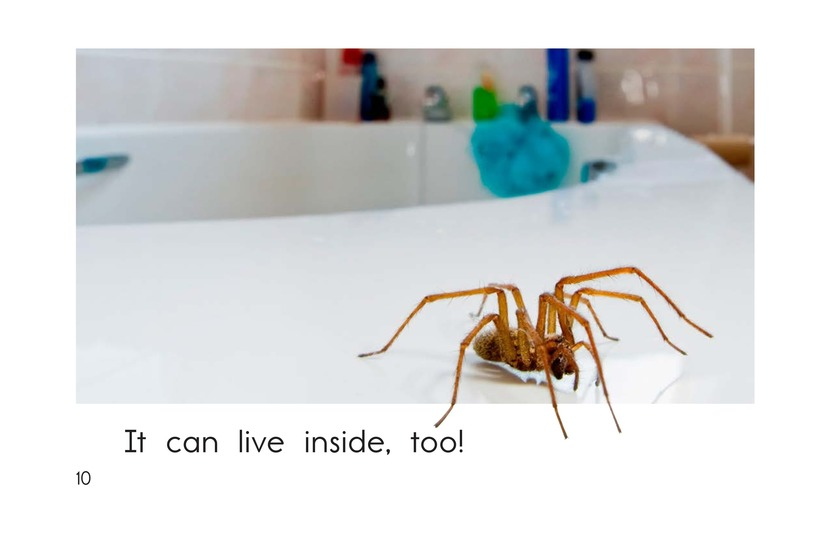 Book Preview For All About Spiders Page 10