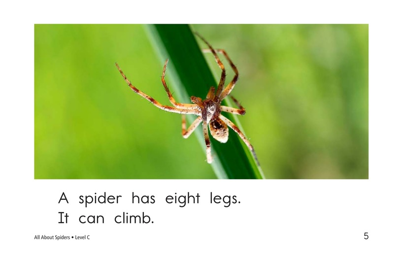 Book Preview For All About Spiders Page 5