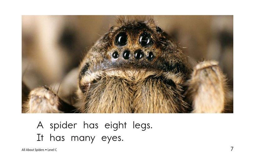 Book Preview For All About Spiders Page 7