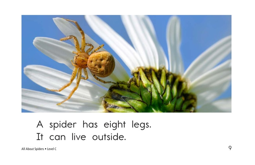 Book Preview For All About Spiders Page 9