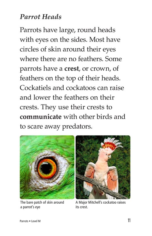 Book Preview For Parrots Page 11