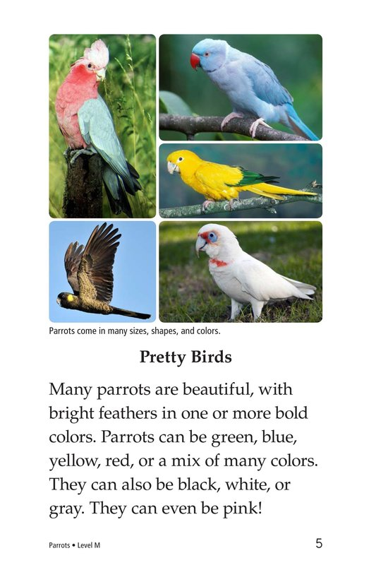 Book Preview For Parrots Page 5