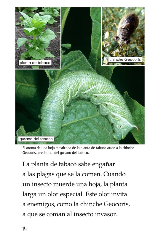 Book Preview For Plant Defenses Page 14