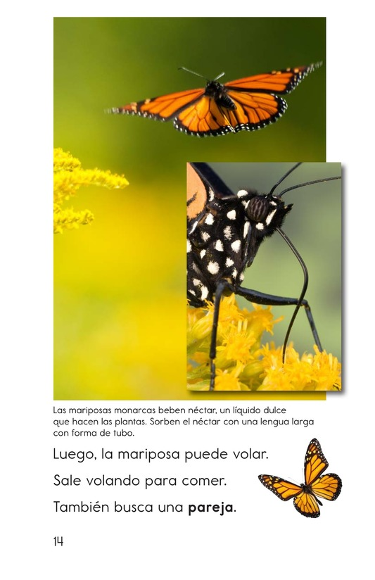 Book Preview For The Butterfly Life Cycle Page 14