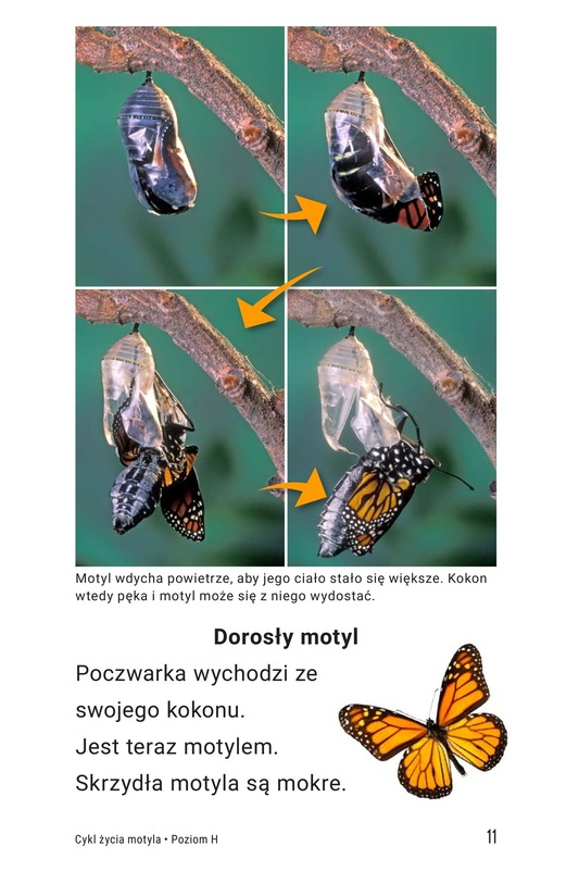 Book Preview For The Butterfly Life Cycle Page 11