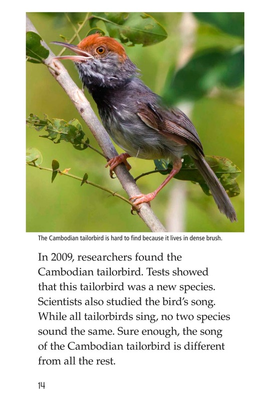 Book Preview For Animal Discoveries Page 14