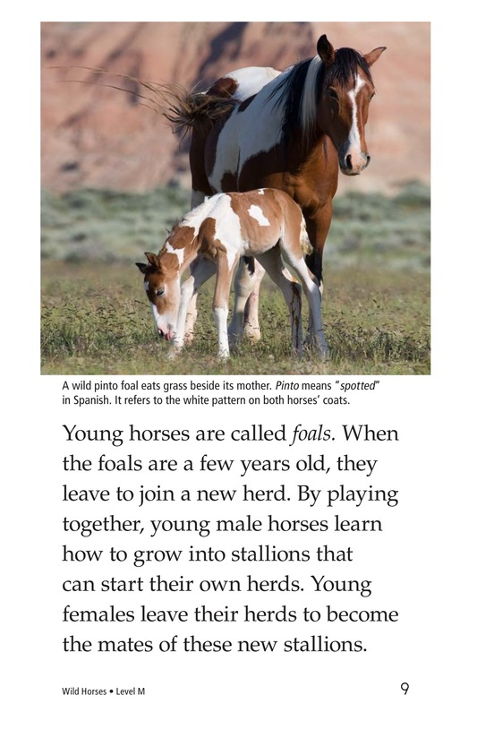 Book Preview For Wild Horses Page 9