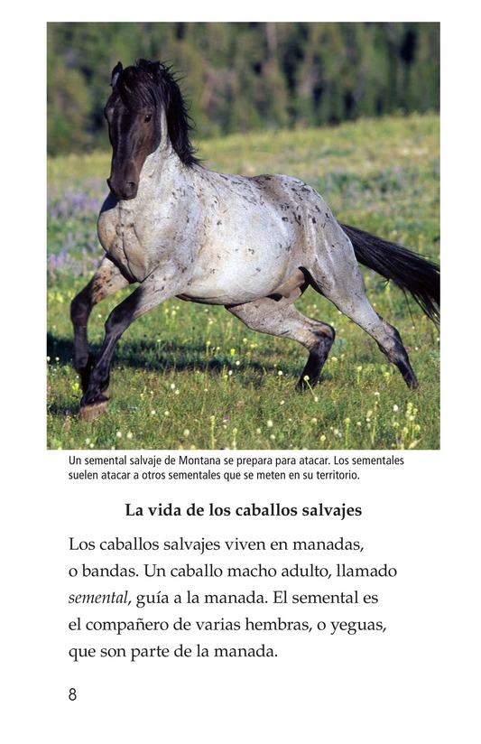 Book Preview For Wild Horses Page 8