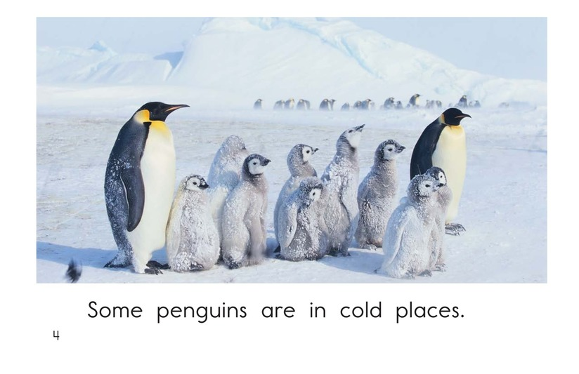 Book Preview For All About Penguins Page 4