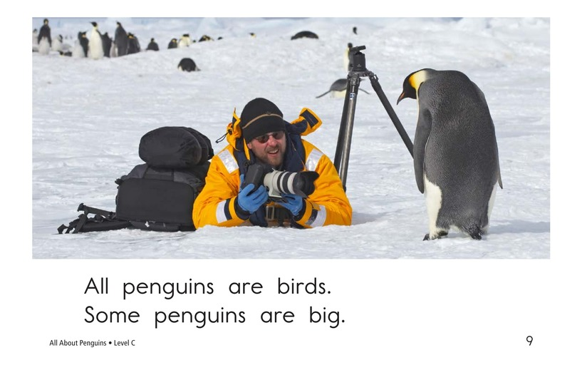 Book Preview For All About Penguins Page 9