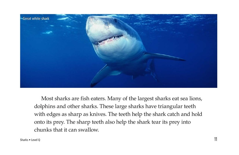 Book Preview For Sharks Page 11