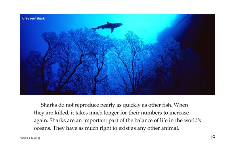 Book Preview For Sharks Page 19