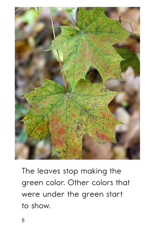 Book Preview For Why Do Leaves Change Color? Page 8