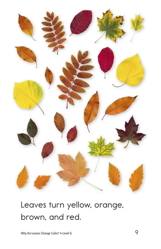 Book Preview For Why Do Leaves Change Color? Page 9