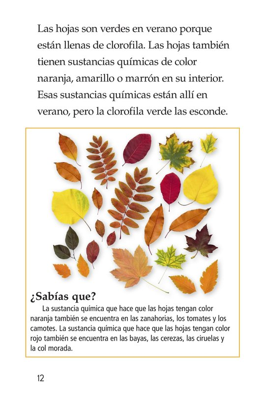 Book Preview For Why Do Leaves Change Color? Page 12